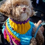Decked out for the show