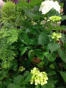 flower show:hydrangea