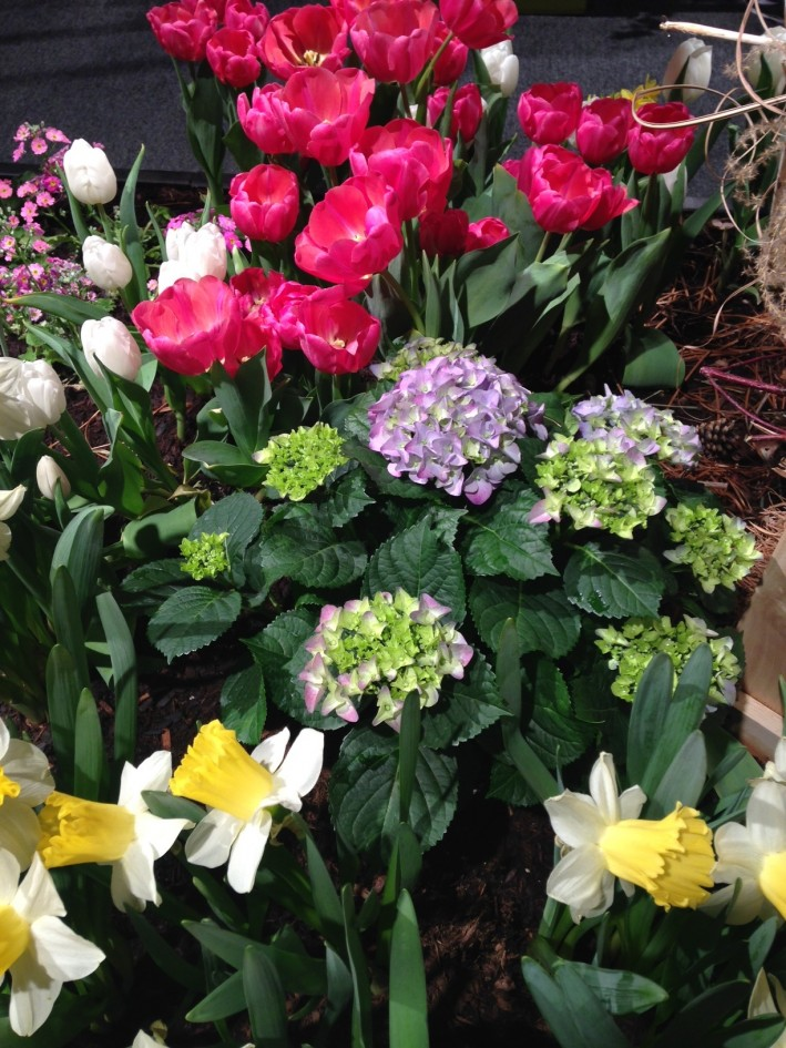 Flower show:tulips